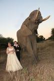 Pares do casamento com elefante fotografia de stock royalty free