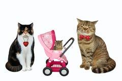 Pares do gato e seu gatinho 2 imagens de stock royalty free