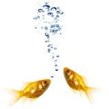 Pares do Goldfish Imagens de Stock