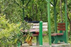 Pares do jardim Imagem de Stock Royalty Free