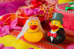 Pares do pato do casamento Fotografia de Stock Royalty Free