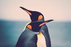 Pares do pinguim de rei imagem de stock