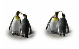 Pares do pinguim no amor - flerte, beije, isolado Imagem de Stock