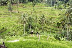 Pares em terraços do arroz de Bali Fotografia de Stock Royalty Free