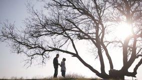 Pares en amor cerca del árbol grande Siluetea a amantes debajo de un árbol grande almacen de metraje de vídeo