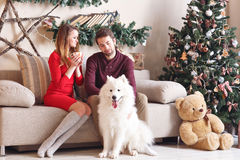 Pares en amor en un sofá gris al lado del árbol de navidad y de los presentes, jugando con el perro de Husky Eskimo de los perrit Imagenes de archivo