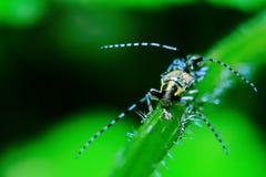 Pares en insectos del amor Fotografía de archivo libre de regalías