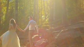 Pares felices elegantes de la boda que se besan en el bosque en puesta del sol almacen de metraje de vídeo