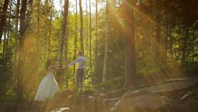 Pares felices elegantes de la boda que se besan en el bosque en puesta del sol almacen de video