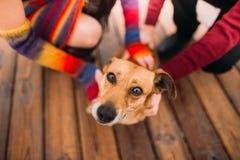 Pares felices jovenes brillantes que juegan con el perro en la litera lluviosa en cierre del otoño para arriba Fondo del mar Imagenes de archivo