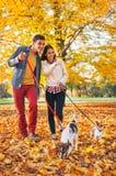 Pares felices que caminan al aire libre en parque con los perros Imagen de archivo libre de regalías