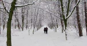 Pares felices que caminan en parque del invierno almacen de metraje de vídeo
