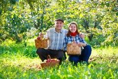 Pares felizes nas colheitas do jardim Imagem de Stock