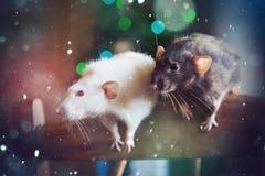 Pares festivos de las ratas del Año Nuevo Fotografía de archivo