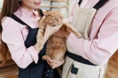 Pares hermosos que se relajan y que juegan con un gato rojo grande en manos foto de archivo libre de regalías