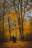 Pares irreconocibles con el cochecillo en camino Árboles cubiertos con las hojas de oro en el bosque del otoño foto de archivo libre de regalías