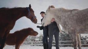 Pares jovenes del retrato que frotan ligeramente caballos en un rancho del país en la estación del invierno Un hombre y una mujer metrajes