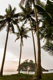 Pares jovenes en la costa entre las palmeras imagen de archivo