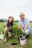 Pares jovenes felices que cultivan un huerto junto Foto de archivo libre de regalías