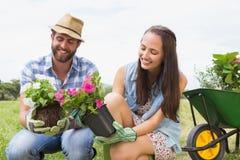 Pares jovenes felices que cultivan un huerto junto Imagen de archivo
