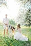 Pares jovenes hermosos en vestido de boda con los galgos en parque Imagen de archivo