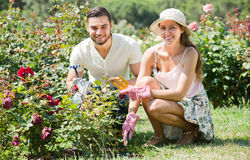 Pares jovenes que cultivan un huerto junto foto de archivo