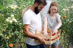 Pares jovenes que cultivan verduras fotos de archivo