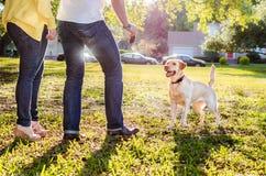 Pares jovenes que juegan la búsqueda con el perro, luz del sol brillante, el esperar del perro Imágenes de archivo libres de regalías