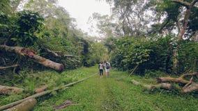 Pares jovenes que llevan a cabo las manos y que caminan en la opinión trasera del bosque verde de la selva Hombre y mujer que cam almacen de video