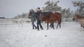Pares jovenes que llevan dos caballos marrones que hablan en el rancho del invierno de la nieve Pares positivos felices pasar tie almacen de video
