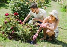Pares jovenes que plantan las flores en el jardín Foto de archivo