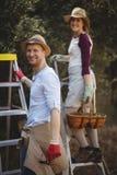 Pares jovenes sonrientes con las escaleras que se colocan en la granja verde oliva Foto de archivo libre de regalías