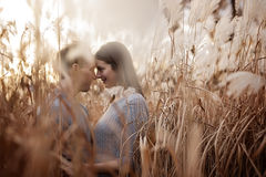 Pares loving bonitos do estilo ocasional da forma nova no campo floral no parque outonal Imagens de Stock Royalty Free