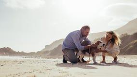 Pares maduros com o cão de estimação na praia fotos de stock royalty free