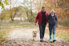 Pares maduros em Autumn Walk With Labrador imagem de stock royalty free