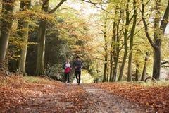 Pares maduros que correm através de Autumn Woodland Together imagens de stock royalty free