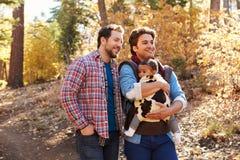 Pares masculinos gay con el bebé que camina a través de arbolado de la caída Fotografía de archivo libre de regalías