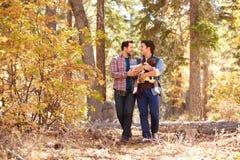 Pares masculinos gay con el bebé que camina a través de arbolado de la caída Fotos de archivo