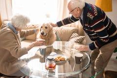 Pares mayores alegres con el perro imagen de archivo libre de regalías