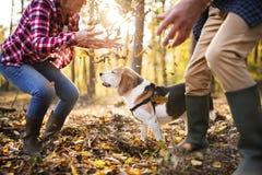 Pares mayores con el perro en un paseo en un bosque del otoño imagen de archivo