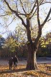 Pares mayores en el parque Foto de archivo