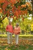 Pares mayores en la naranja Foto de archivo libre de regalías