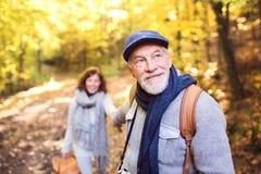 Pares mayores en un paseo en bosque del otoño Foto de archivo libre de regalías