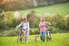Pares mayores hermosos con las bicicletas y el perro afuera en naturaleza de la primavera fotos de archivo