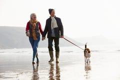 Pares mayores que caminan a lo largo de la playa del invierno con el perro casero Foto de archivo