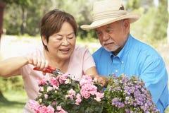 Pares mayores que cultivan un huerto junto Foto de archivo