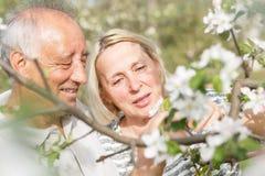 Pares mayores que disfrutan de un momento en su jardín floreciente Foto de archivo libre de regalías