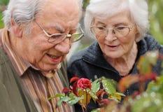 Pares mayores que miran a una rosa Imagen de archivo
