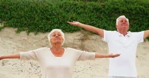 Pares mayores que realizan yoga almacen de video