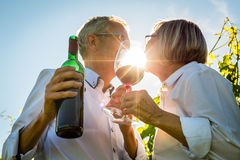 Pares mayores que tuestan con las copas de vino en viñedo Imagen de archivo